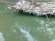 BABLI pond